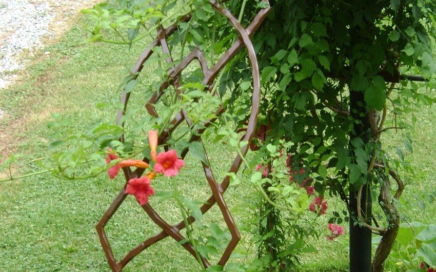 Arch with Climbing Vines